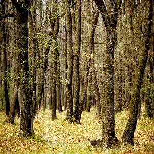 suprafețe împădurite
